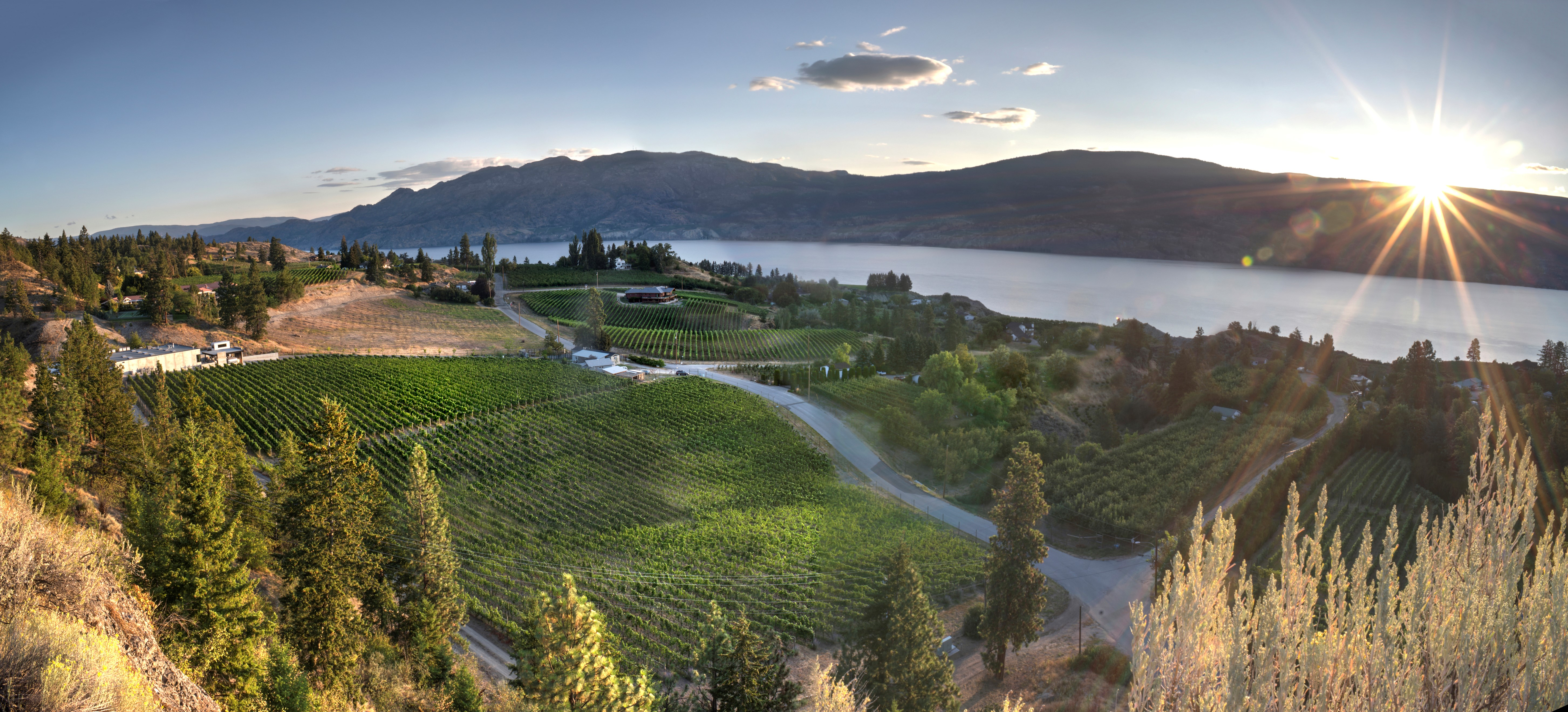 A Panoramic View of Haywire Winery's Switchback Organic Vineyard with Lake Okanagan in the Distance